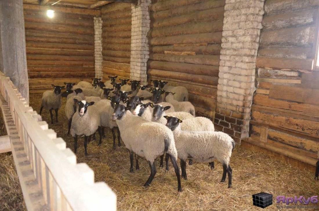 Содержание овец в зимний период: правила ухода и подготовка помещения