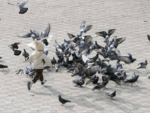 Болезни голубей и их лечение, подробное описание симптомов с фото