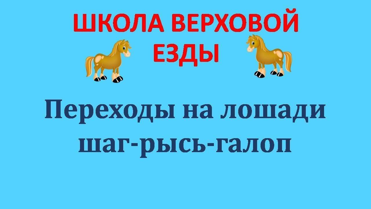 ᐉ вид бега лошади: аллюры и их разновидности - zooon.ru