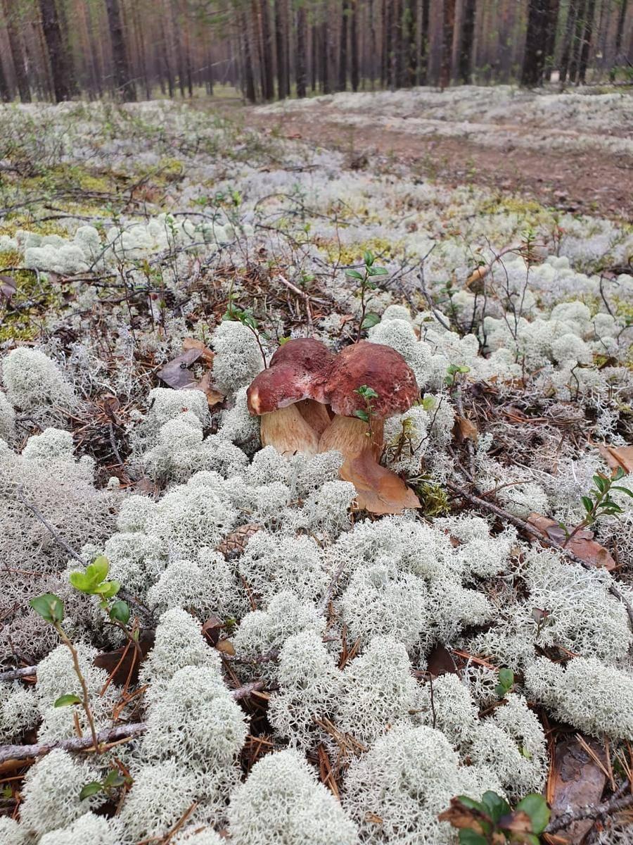 Грибы вологодской области 2020: когда и где собирать, сезоны и грибные места