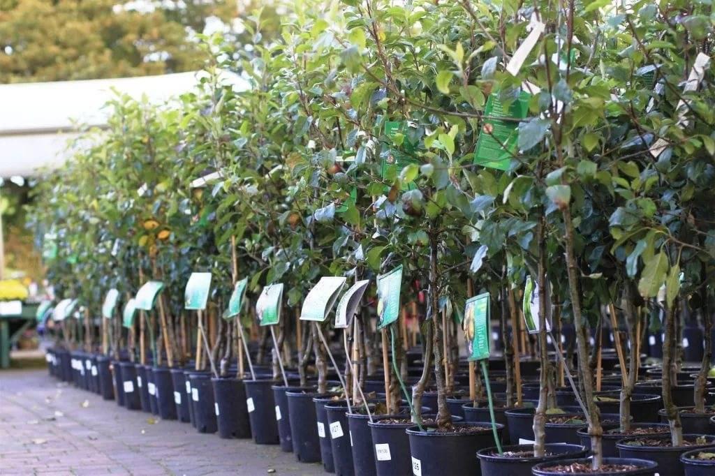 Правильная подготовка яблонь к зиме. как, чем и когда укрывать деревья?
