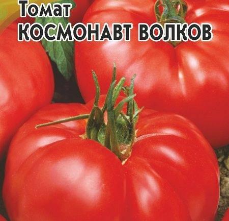Непростой в уходе, но невероятно урожайный сорт отечественной селекции — томат «космонавт волков»