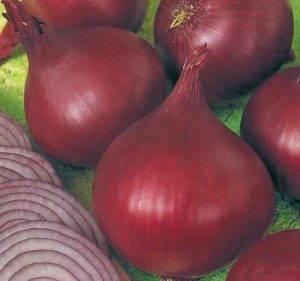 Лук ред барон: описание сорта, севок, посадка под зиму, выращивание, озимый, характеристика