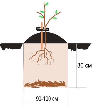 Как посадить яблоню весной: выбор саженцев, подготовка места посадки