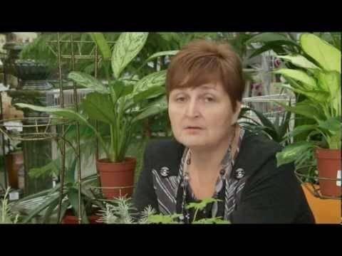 Комнатные растения, которые нельзя держать в доме с маленькими детьми - лайфхакер