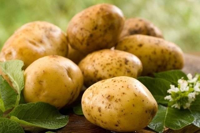 Сок картофельный, польза и вред для организма человека