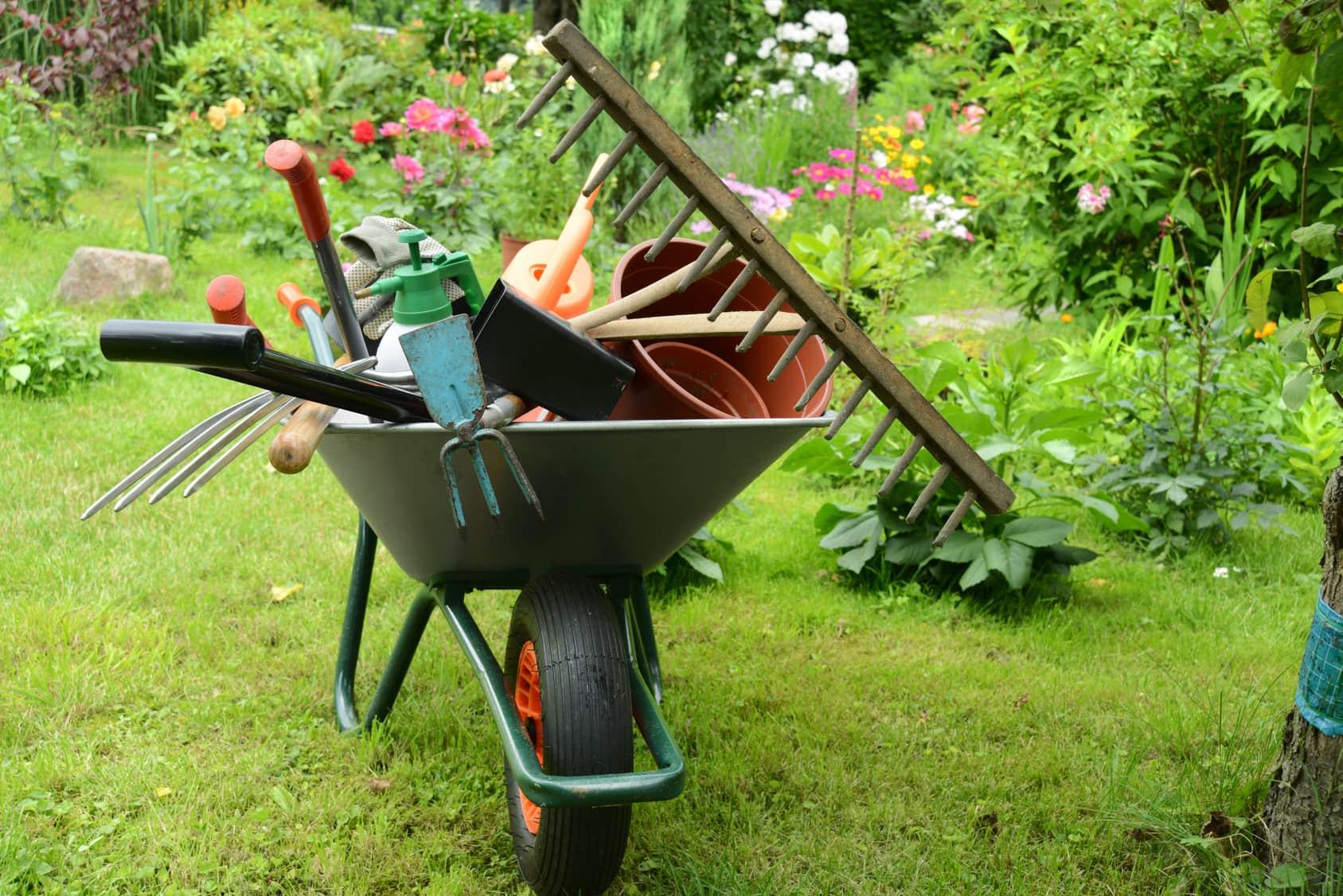 Когда опрыскивать яблони весной, летом и осенью, сроки обработок от болезней и вредителей