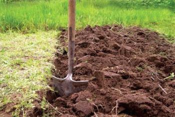 Выращивание кабачка аэронавт
