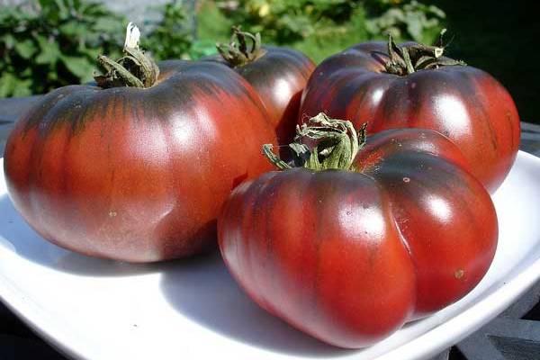 Сорт томата шоколадный: описание, характеристика