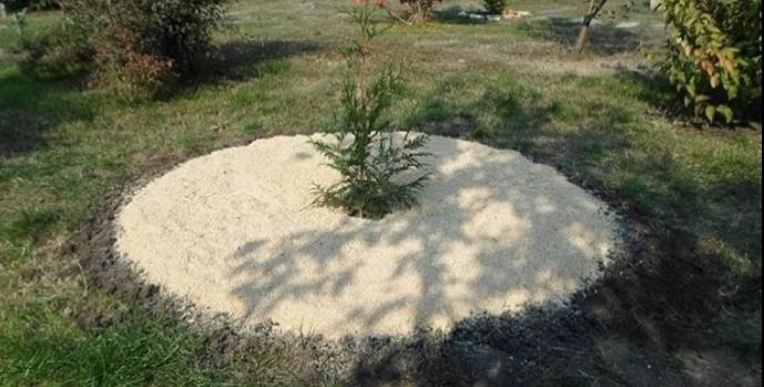Древесные опилки как удобрение для огорода
