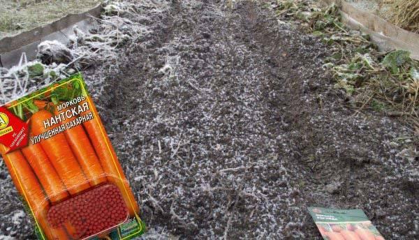 Посадка моркови под зиму: сроки посадки осенью, сорта для подмосковья
