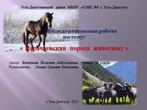 Ставропольская порода овец: характеристики, содержание и уход