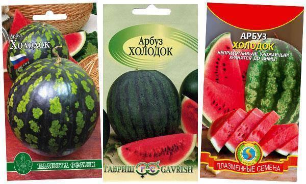 Подробное описание и выращивание сорта арбуза холодок