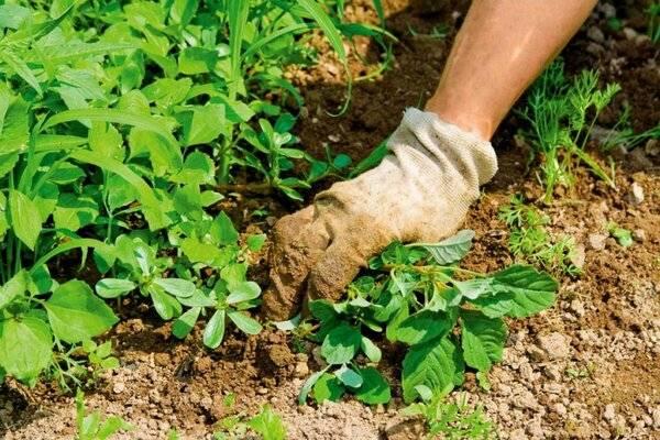 Агрокиллер против сорняков: инструкция по применению и отзывы