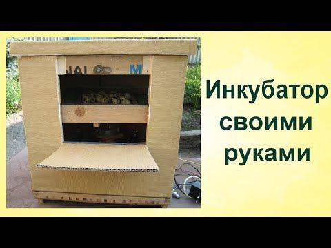 Инкубатор для перепелов своими руками: инструкция по изготовлению