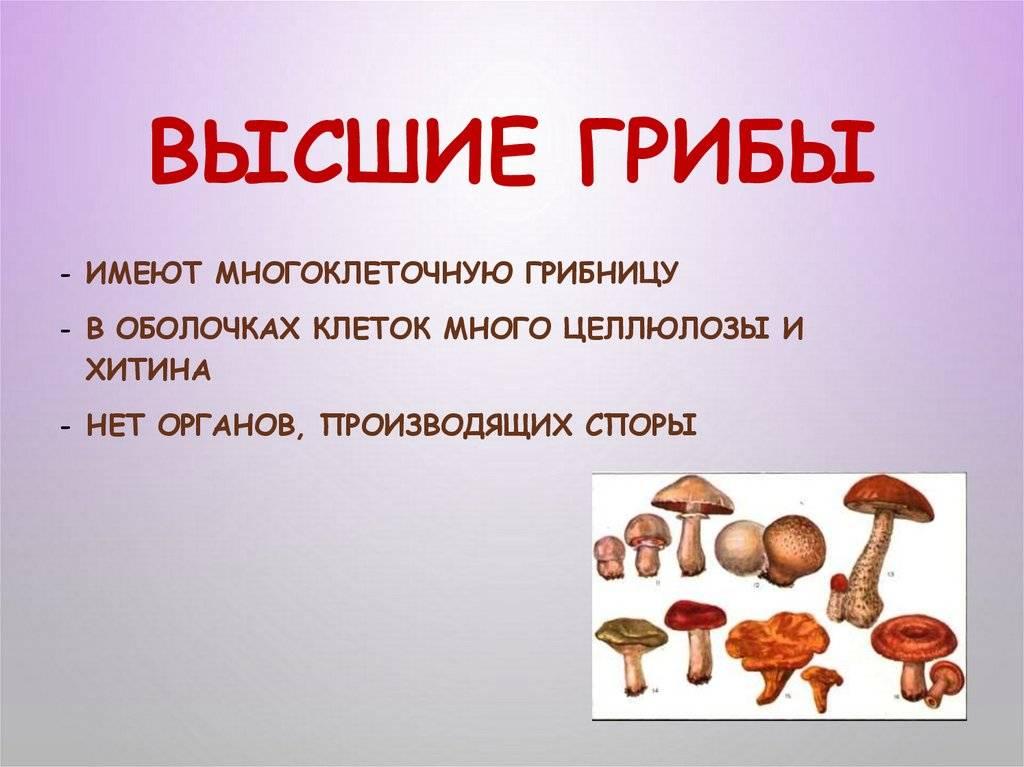 Черты сходства и различия грибов и растений. сходство грибов с растениями и животными