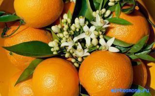 Сонник много апельсинов. к чему снится много апельсинов видеть во сне - сонник дома солнца