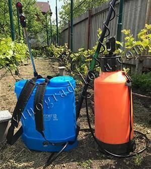 Как проводится осенняя подкормка винограда