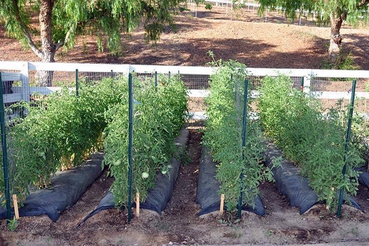 Шпалера для огурцов своими руками: выращиваем огурцы на шпалере в открытом грунте