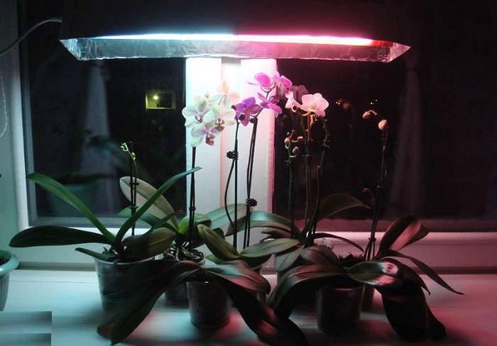 Пересадка орхидеи после покупки в магазине во время цветения в домашних условиях и видео о правильном уходе за ней в новом горшке