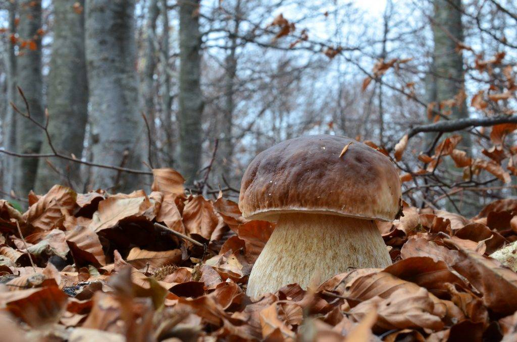 Какие грибы растут в Архангельске и сколько длится сезон сбора