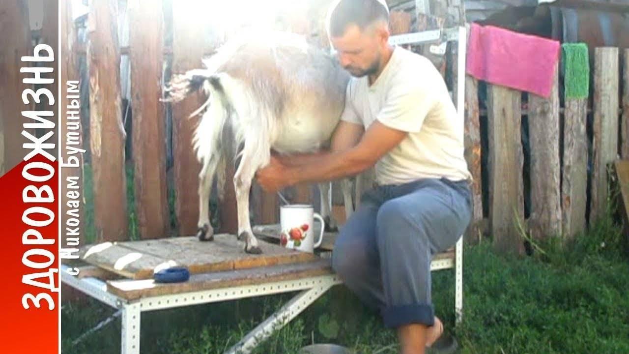 Станок для дойки коз своими руками