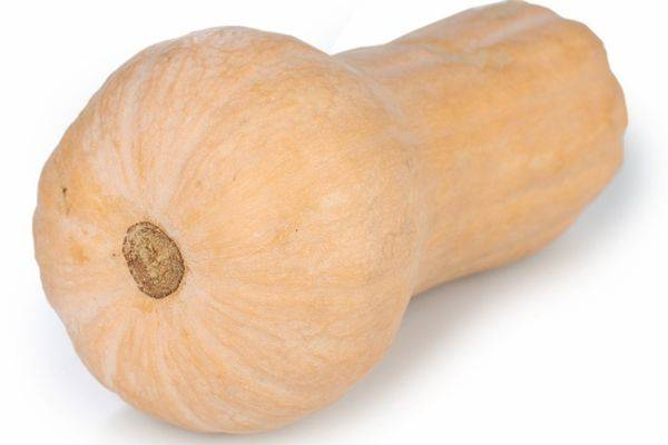 Тыква баттернат: выращивание, описание сорта, рецепты и отзывы