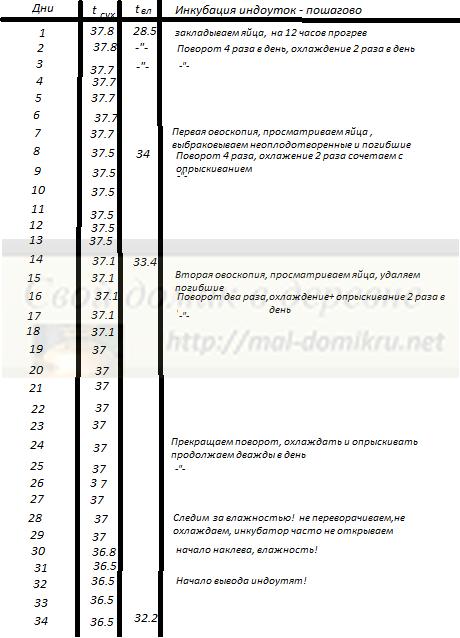 Инкубация индоуток в домашних условиях: режим, таблица — selok.info