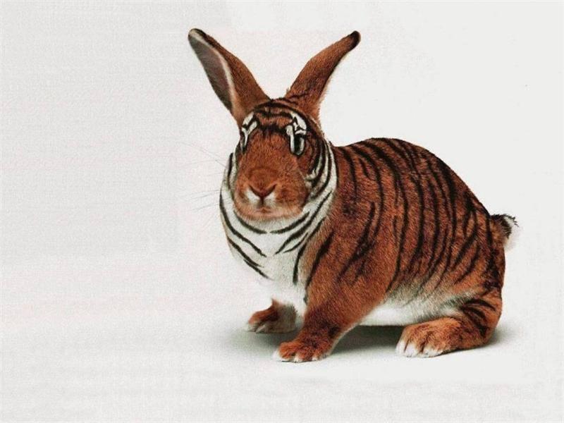 Самые интересные факты о кроликах для детей
