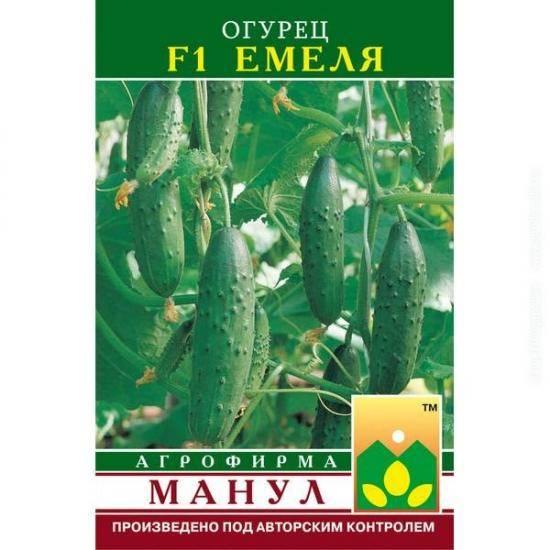 Огурцы емеля характеристика сорта и особенности выращивания - дневник садовода semena-zdes.ru