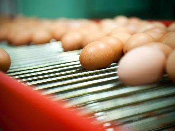 Как кормить курей, чтобы несли много яиц: описание, фото- и видеообзор