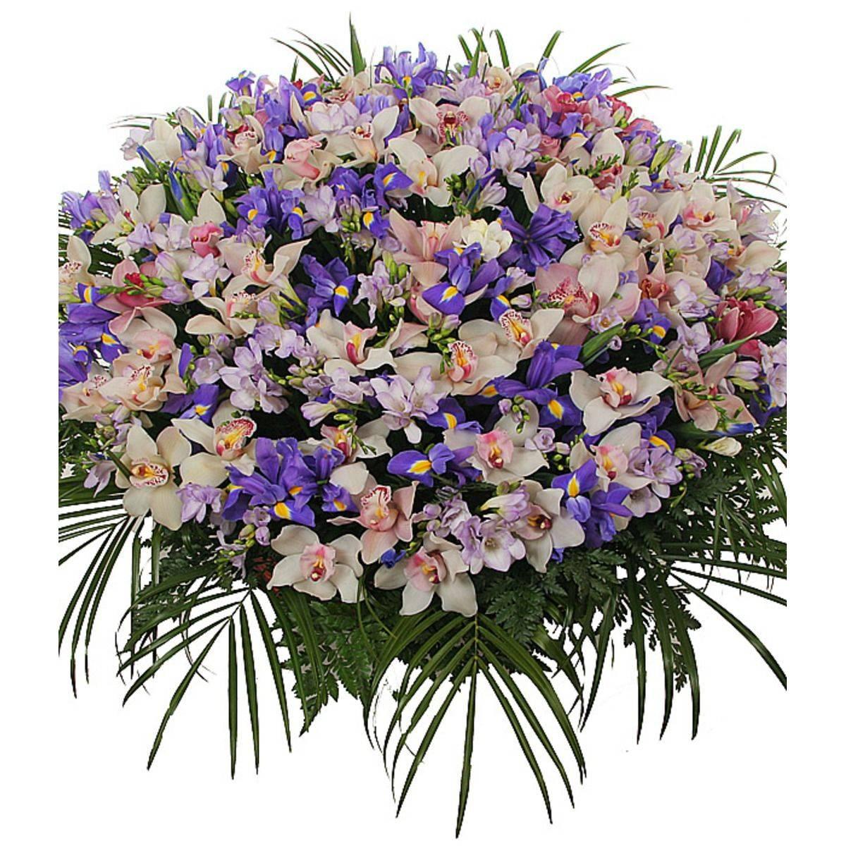 Особенности орхидеи и папоротника