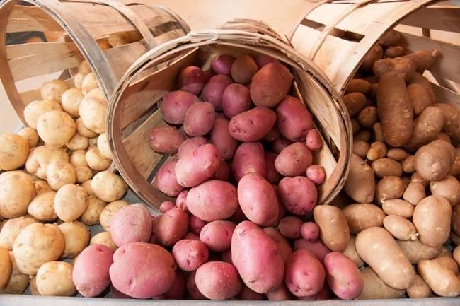 Заболевания картофеля, какие бывают, что делать и как вылечить болезни картошки