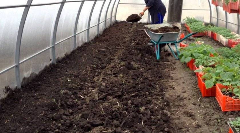 Огурцы посадка и уход в открытом грунте, подготовка и посев семян