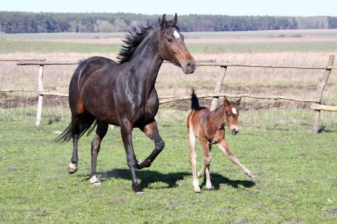 Зачем лошадям подковывают копыта