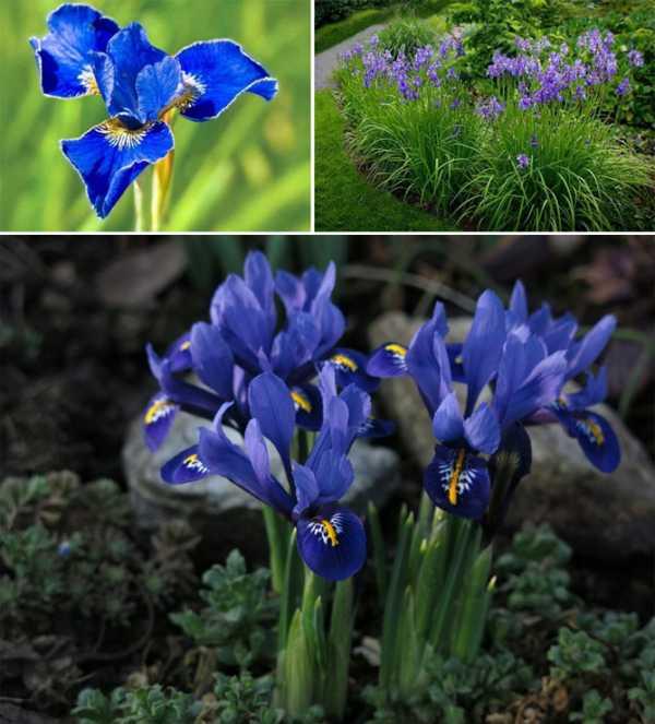 10 самых неприхотливых многолетних цветов. названия, описания, виды, фото — ботаничка.ru