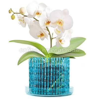 Какой нужен горшок для орхидеи: как лучше выбрать ёмкость, чтобы правильно посадить цветок, должны ли быть дырки, как определиться с размером