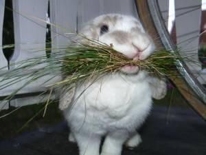 Специфика содержания кроликов для максимального получения меха и мяса