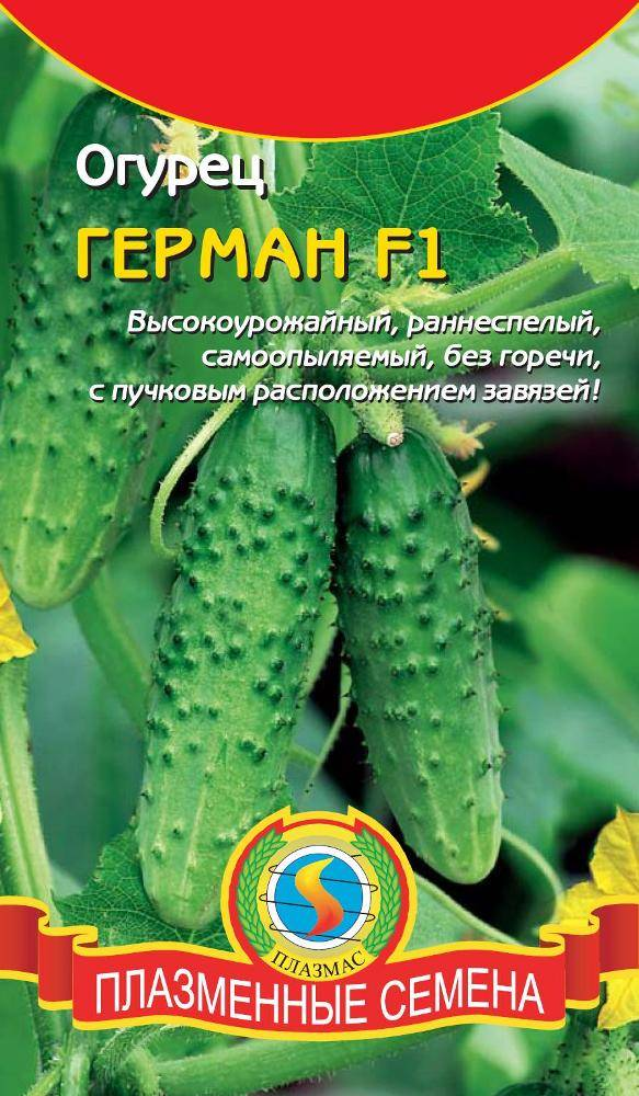 Огурцы ухажер – особенности выращивания, характеристика сорта, преимущества