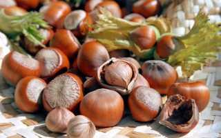 Как вырастить фундук из орехов - деревья и кустарники | описание, советы, отзывы, фото и видео