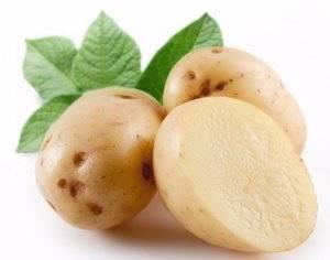 27 лучших сортов картофеля для среднего урала