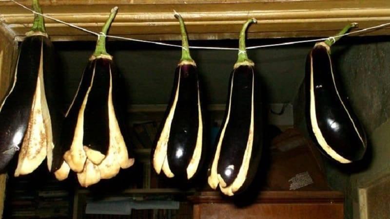 Сушка баклажанов в электросушилке - агрономы