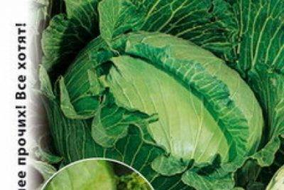 20+ холодостойких овощей: что сажать в первую очередь