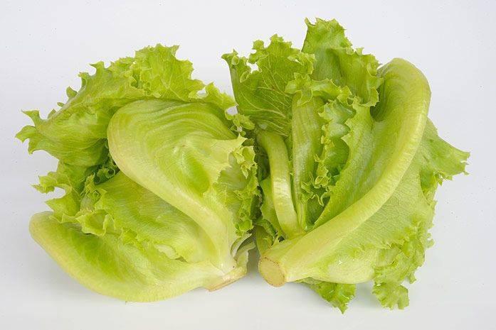 Салат айсберг – польза и вред, свойства, калорийность