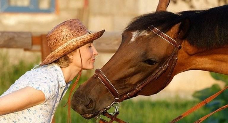 Сколько лет живут лошади в домашних условиях и в природе