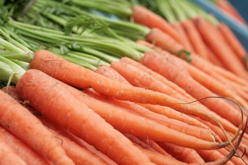 Как сажать морковь. когда сажать морковь весной в грунт в 2021 году