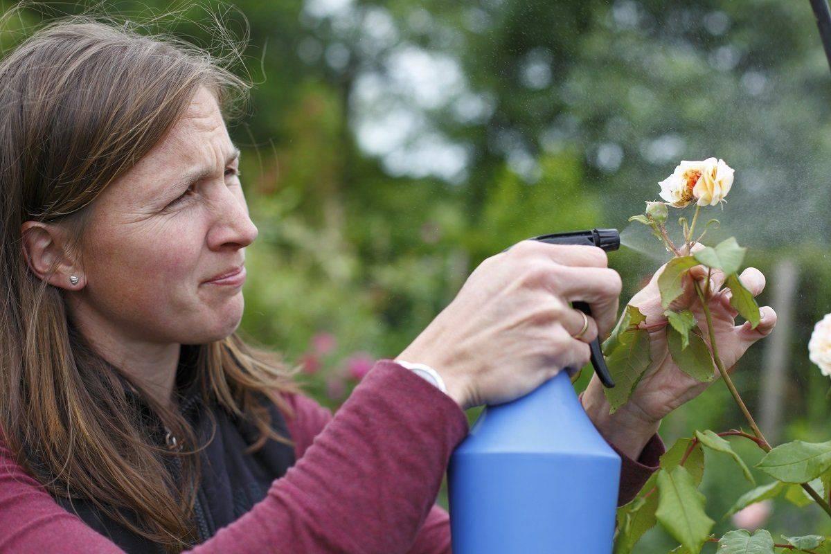 Древесная зола в качестве раскислителя, фунгицида и инсектицида