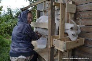 Как правильно доить козу?