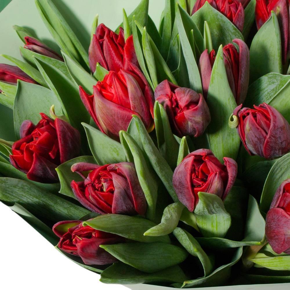 Пионовидные тюльпаны – описание, особенности, цвета, сорта, правила посадки