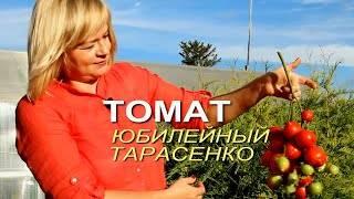 Томат юбилейный тарасенко описание сорта, фото, отзывы